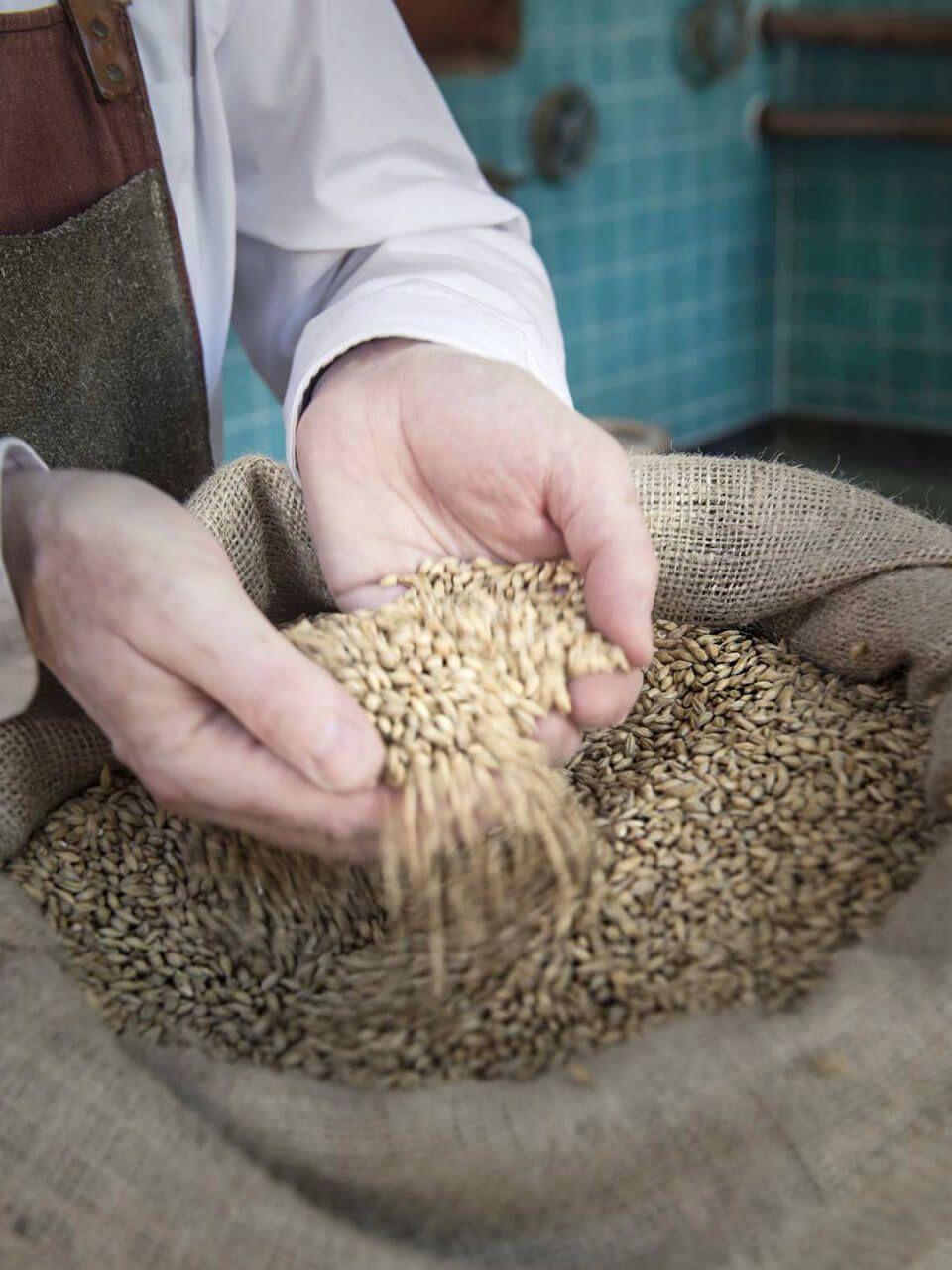 Malz aus Gerste ist ein Hauptbestandteil im Bier. Wir verwenden nur Malze aus der Region Franken.