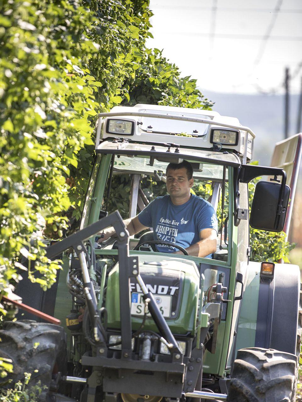 Traktor im Hopfenfeld bei der Ernte des Spalt-Spalter Aromahopfen