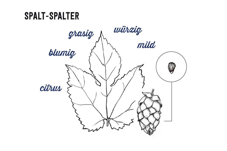 Spalt-Spalter
